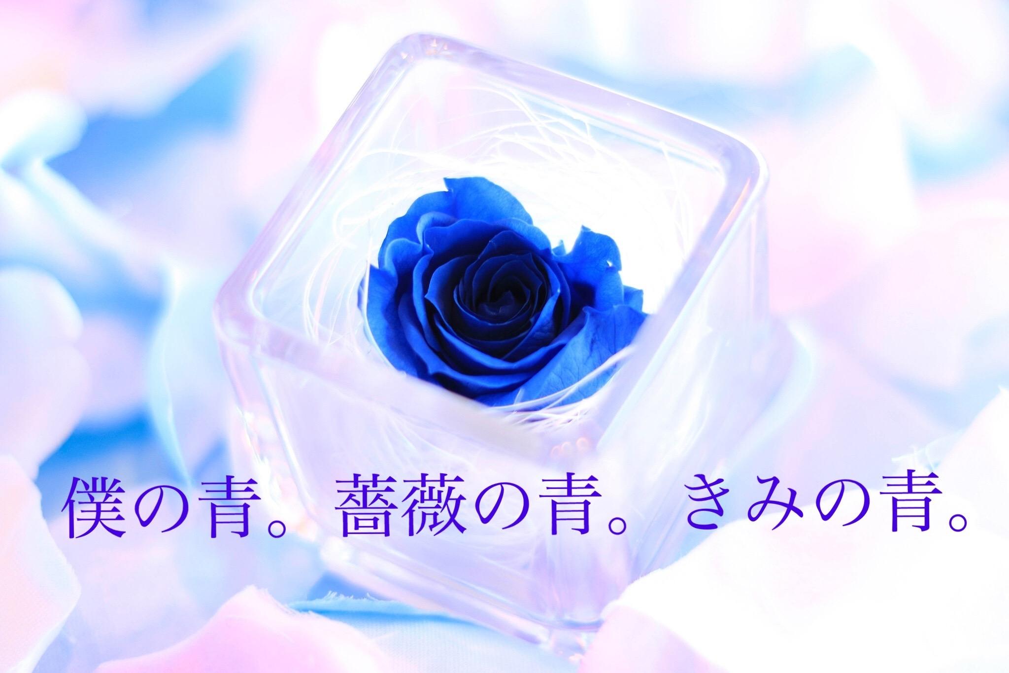僕の青。薔薇の青。きみの青。の表紙