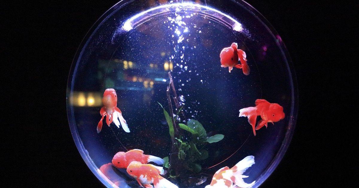 金魚鉢の夢の表紙