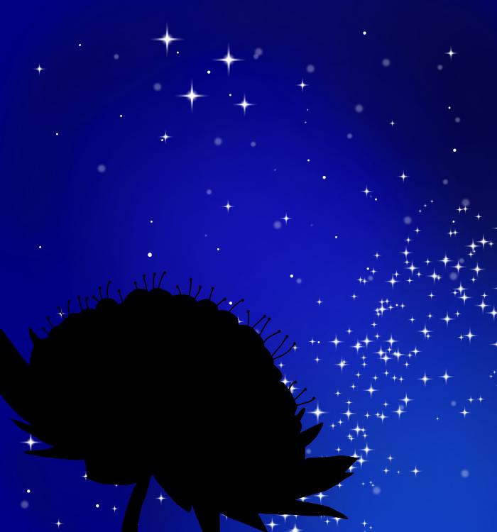 アストラの夜空の表紙
