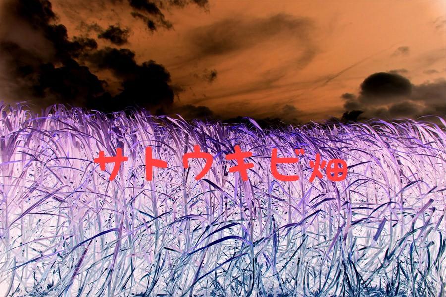 サトウキビ畑の表紙
