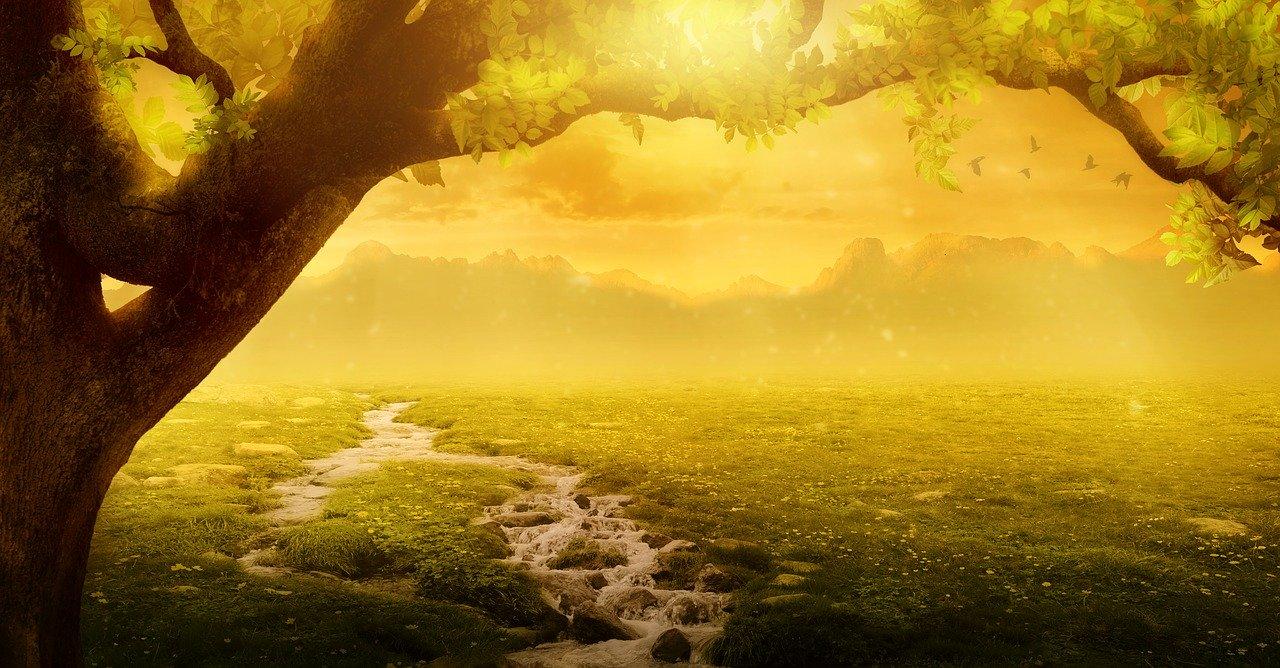 仮想の森の表紙